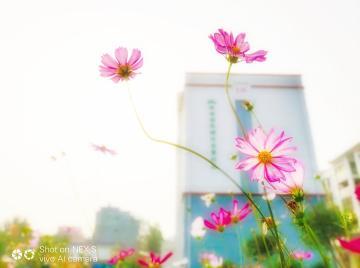 【NEX样片】花开如蝉翼