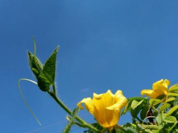 【创意摄影】夏日蓝天下