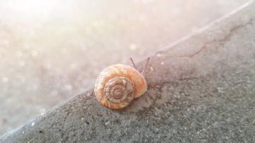 【创意摄影】蜗牛
