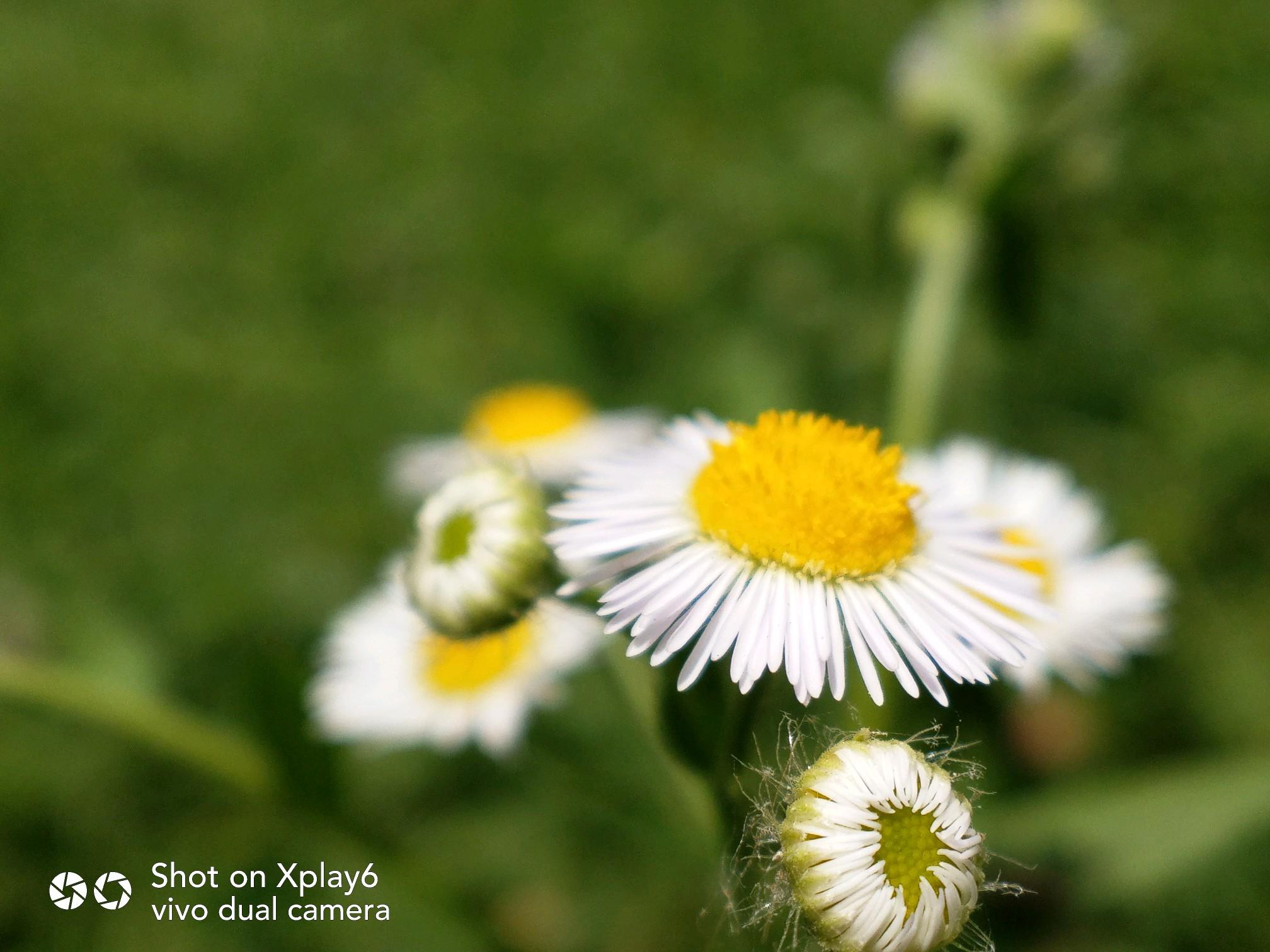 【创意摄影】那些花儿