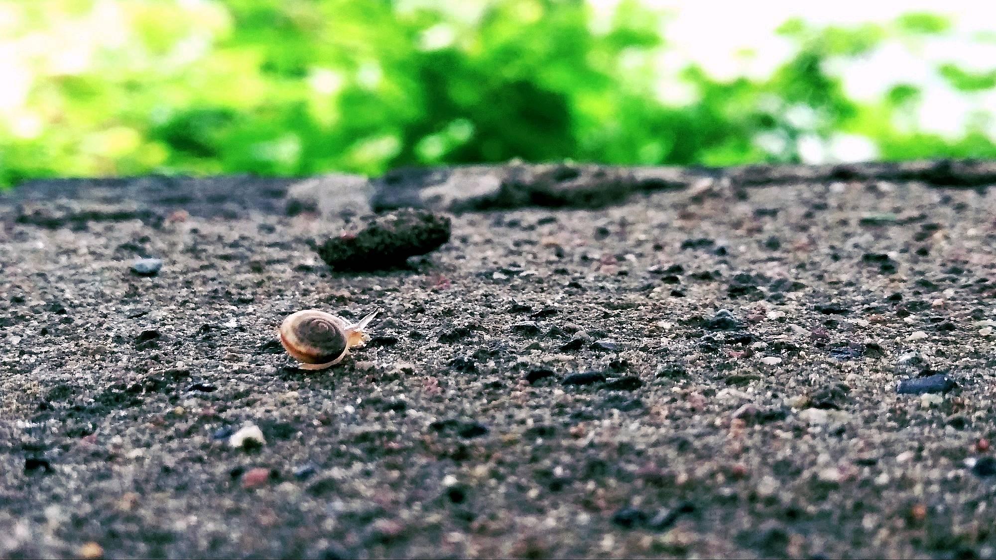 清晨的蜗牛