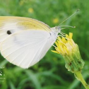 微距-蝴蝶