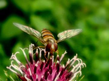 【V3Max A】微世界/昆虫