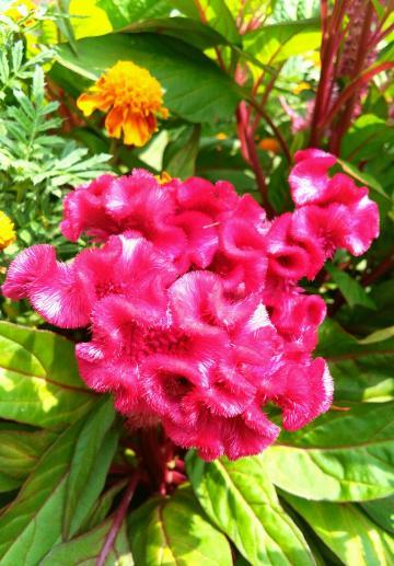Y51随拍:花