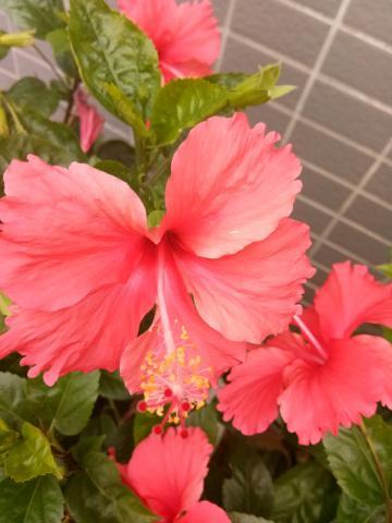 情人节赏花