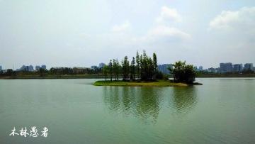随拍   观音湖湿地小景