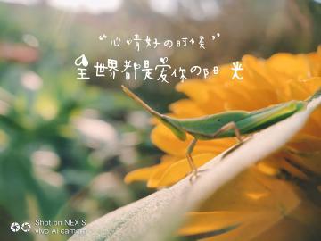 【NEX】生活拾趣
