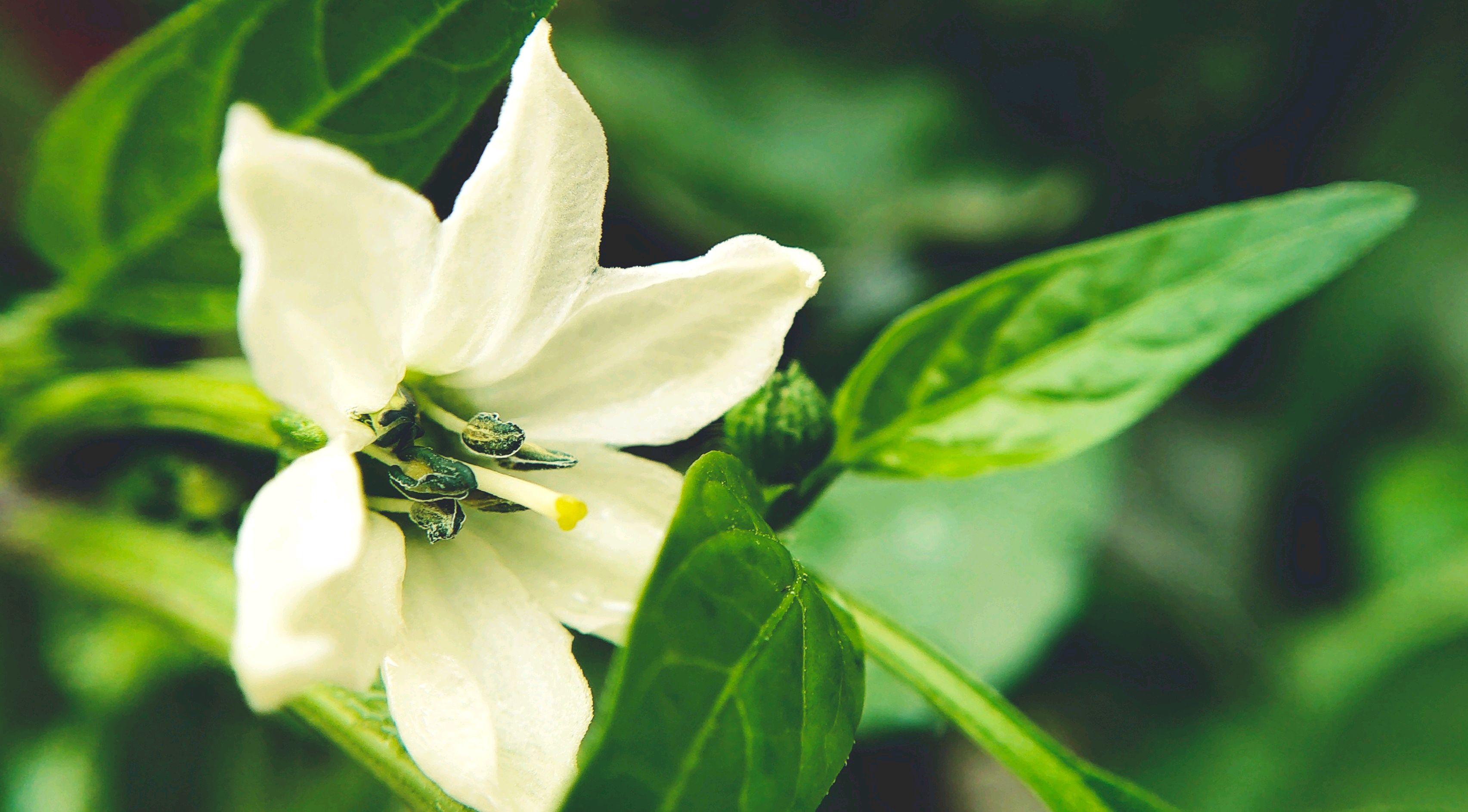 【NEX样张】花的纯白