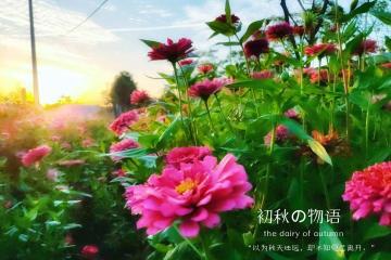【NEX】九月花儿飞