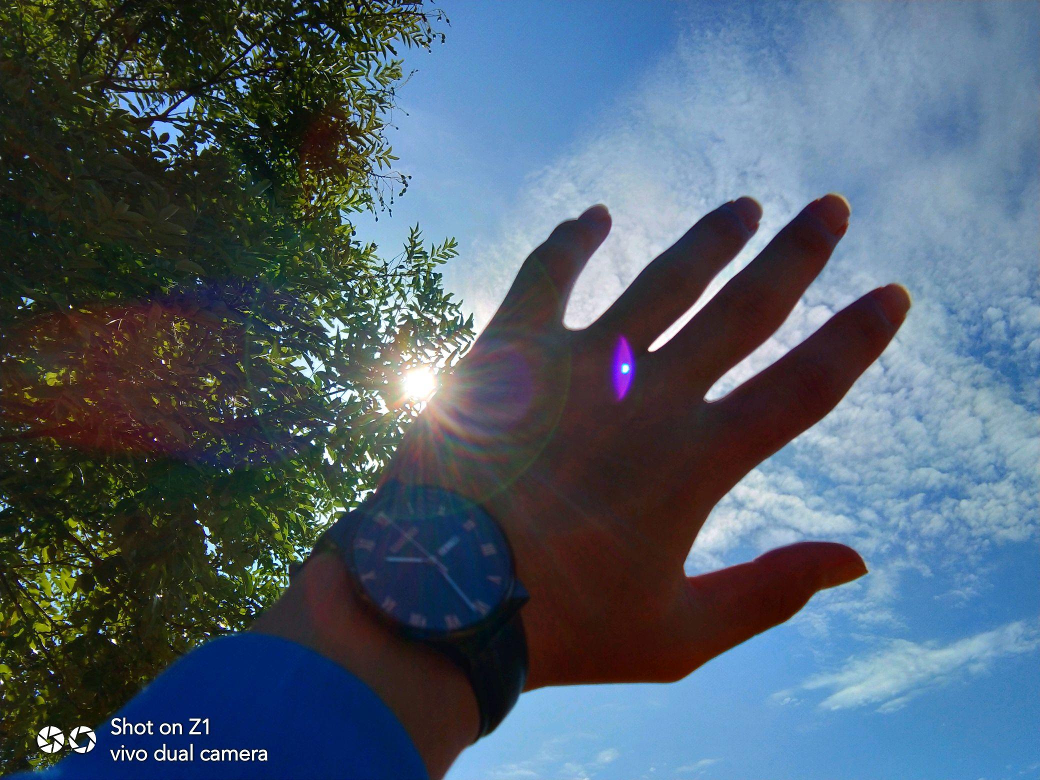 阳光下的手