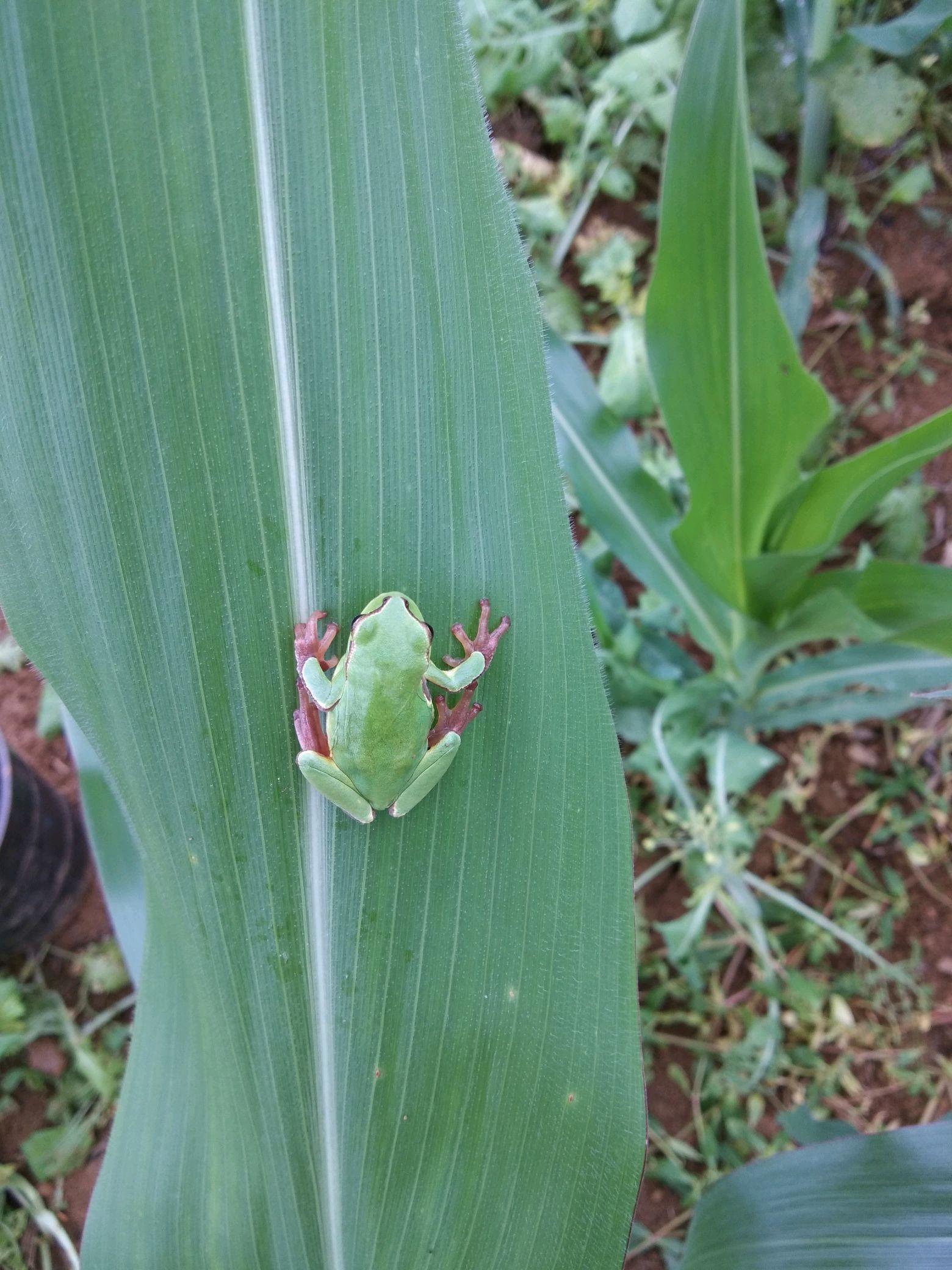 田野里看青蛙,看虫子!