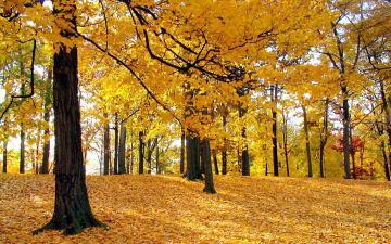 【秋】枫树林