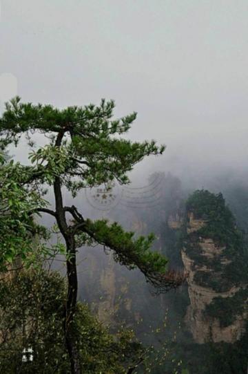 随拍   群山含羞雾遮颜