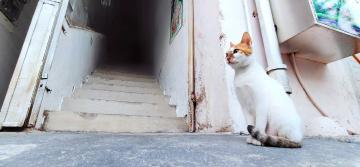 【X23】浪流猫
