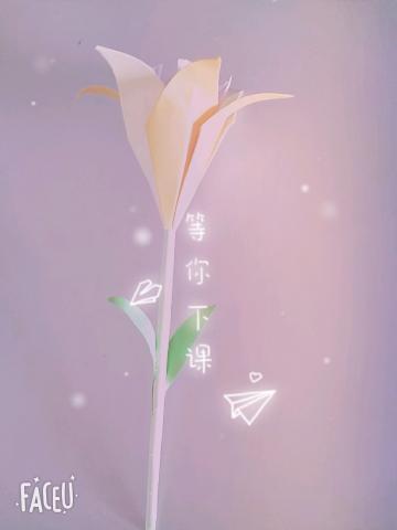 DIY 兩生花🌸🌺️