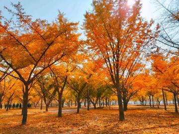 天凉好个秋。