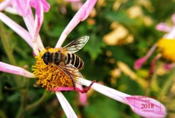 【秋】忙碌的蜜蜂