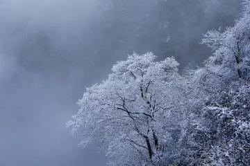 【vivo x20摄影】巴山大峡谷的第一场雪