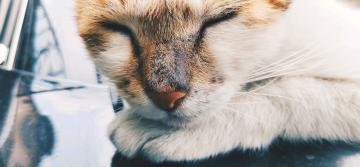 【X23张样】甜睡的流浪猫