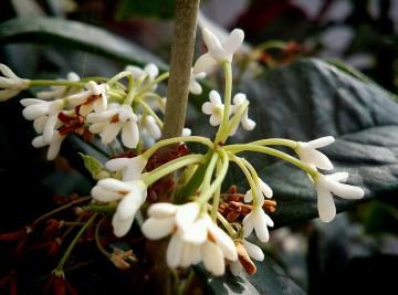 Y51随拍:赏花