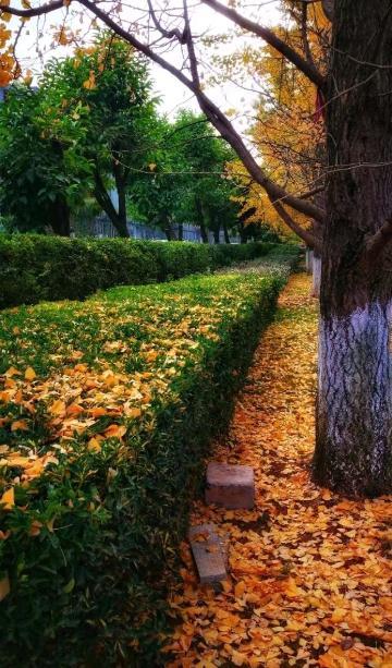 金黄色的冬天