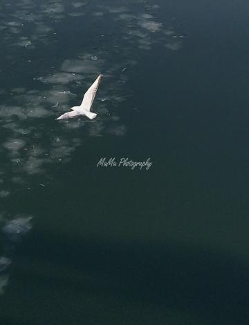 用vivo拍海鸥