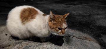 【X23】流浪猫发呆