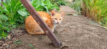 【X23】猫咪伙伴