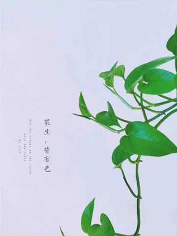 【NEX】绿萝