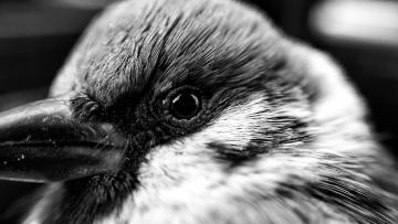 【寻冬】冬天里的麻雀