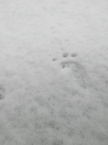 【寻冬】  雪