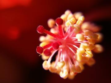 【Xplay5S摄影样张】冬天也有生机勃勃的花海