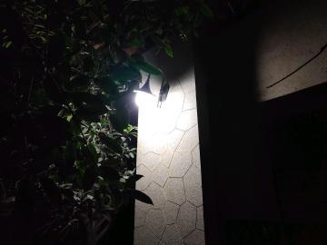 nex夜拍,灯光下效果