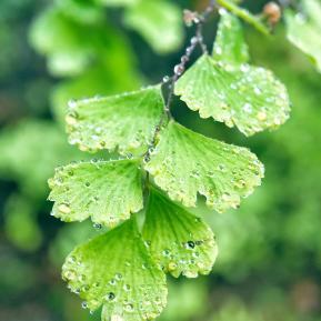 嫩绿的芽儿