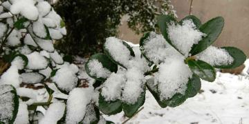 【年初三】夜来雪