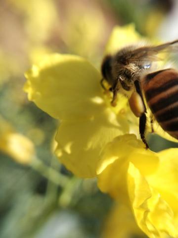 辛勤劳作的小蜜蜂