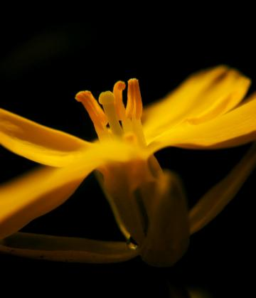 逆光中的花儿[Y67]