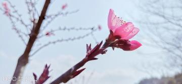 【寻春】iQOO镜头里的春天