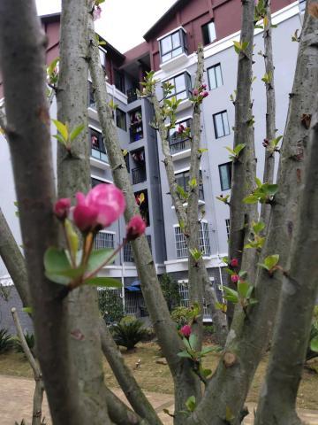 【寻春】小区花卉