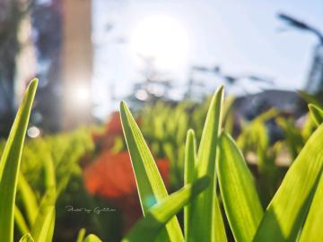 【寻春】清晨的草坪