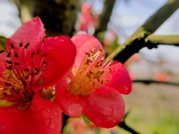 【寻春】一片春心付海棠