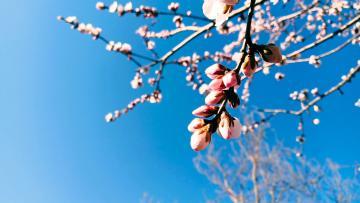【寻春】+春日迟迟,卉木萋萋。