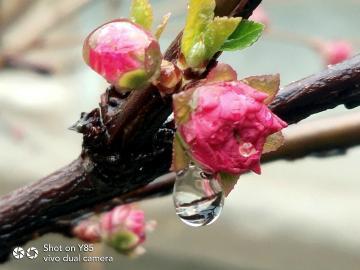 【y85A】春雨过后