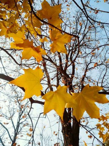生如夏花   死如秋叶