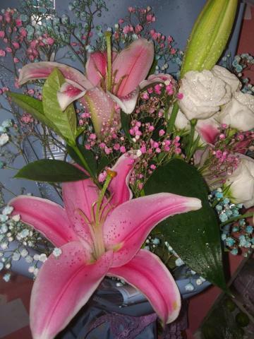 【五月签到】鲜花