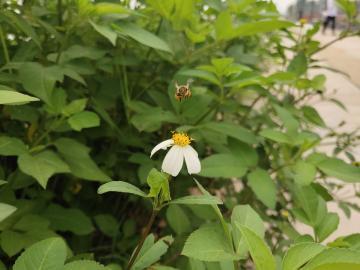 NEX 连拍下的小蜜蜂