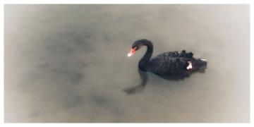 #S1 Pro高光时刻 黑天鹅