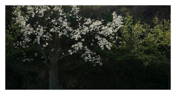 X27逆光挑战 阳光下的一棵树