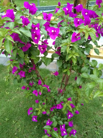天气虽冷,花儿照样开得艳丽