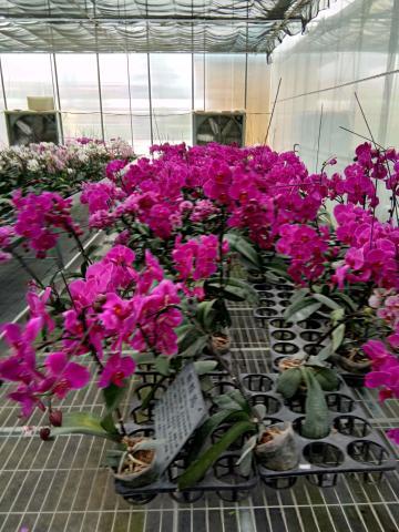 #S1 Pro高光时刻#美丽的花儿
